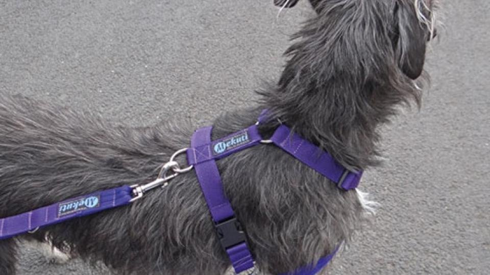 Best Dog Harness 2018  Keep Your Dog In Control With The