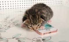 iPhone SE with kitten hero shot