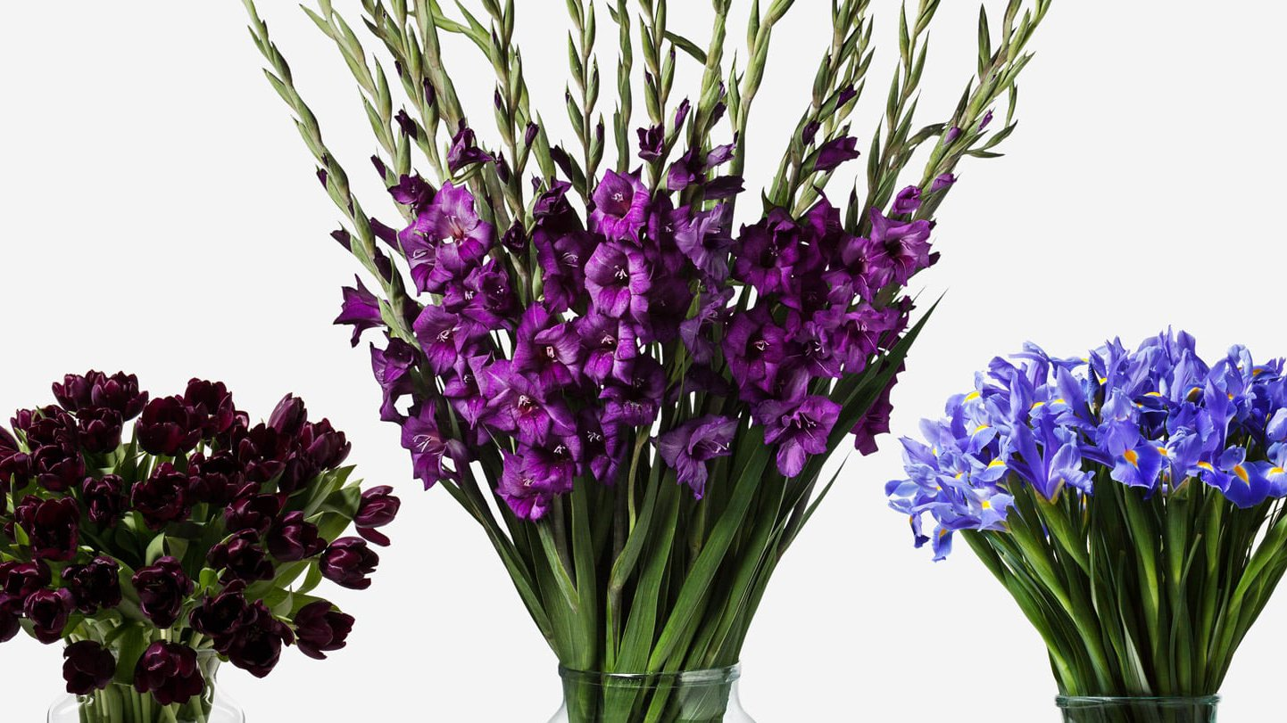 Flowers the Waitrose way