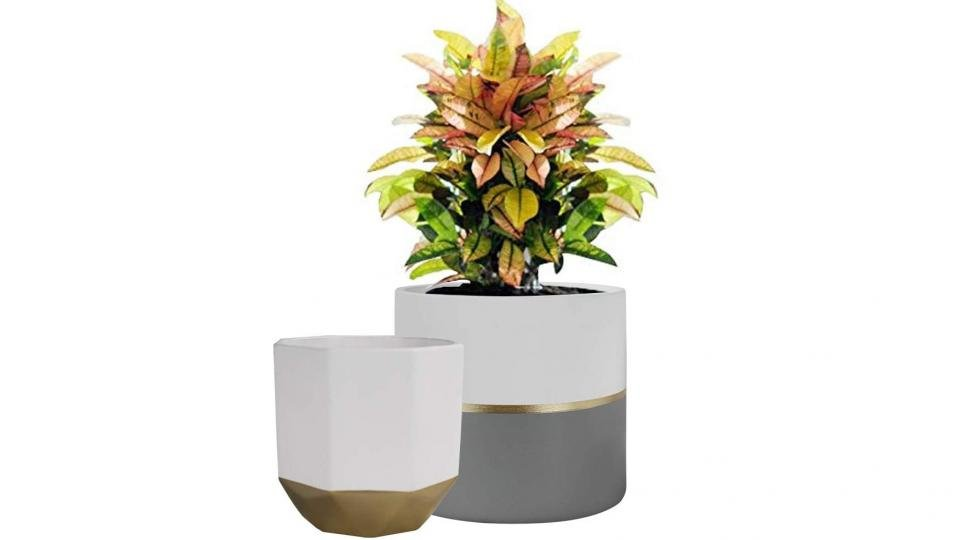 Best House Plants 2021 Our Favourite Indoor Foliage For Your Home Expert Reviews