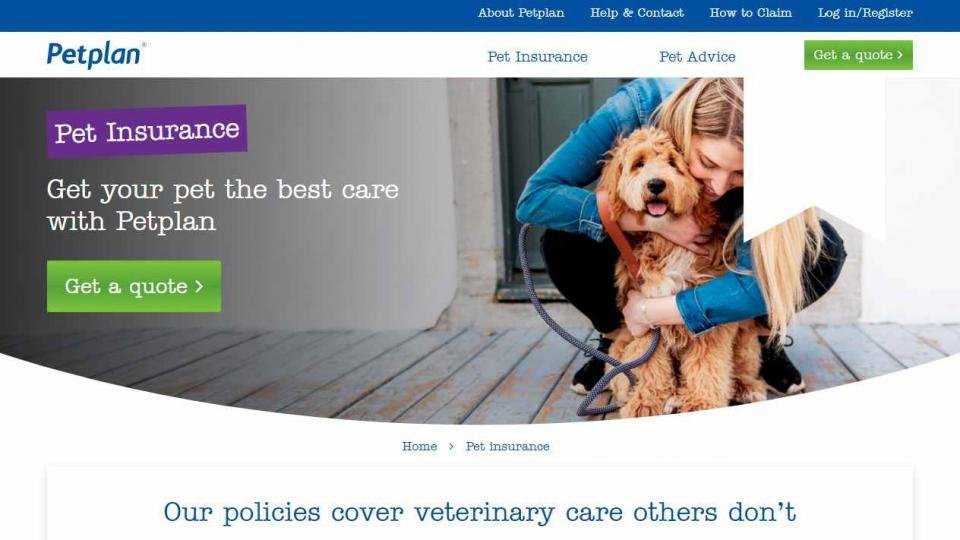 Best pet insurance: The best pet insurance policies to cover vet bills for your cats and dogs